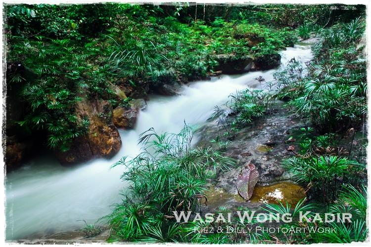Wasai 4