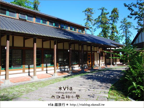 【溪頭一日遊】森林中的夢幻校園~內湖森林小學11