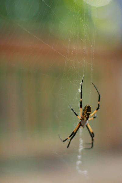 spider2001