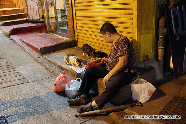 Old woman feeding strays