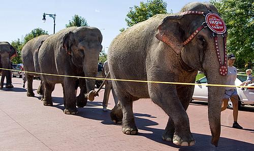 elephantperpwalk