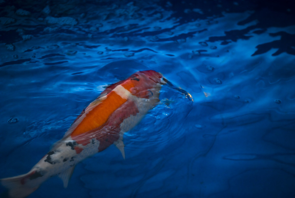 The World's most recently posted photos of fish and sanke