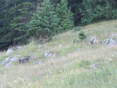 Bild 111 (xstevex22) Tags: 2010 wanderung vogelsang brnnstein kleinertraithen traithen rosengasse steilnerjoch himmelmoosalm grosertraithen