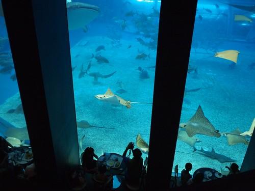 美ら海水族館の大水槽前の食堂