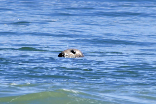 coast guard beach seal 3