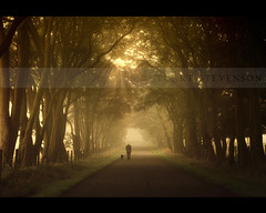 Into the light. (Stuart Stevenson) Tags: morning trees light dog sun mist man tree fog golden scotland walk scottish wideangle tunnel again covered cinematic goldenhour sunbeams rayoflight walkingthedog filteredlight divineintervention intothelight clydevalley scotchmist treelinedavenue canon5dmkii stuartstevenson