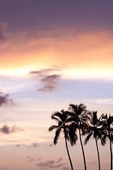 Colores en el cielo 2 (Shuuyy) Tags: sunset colors silhouette backlight night contraluz palms puerto atardecer cloudy palmeras colores vallarta puertovallarta silueta
