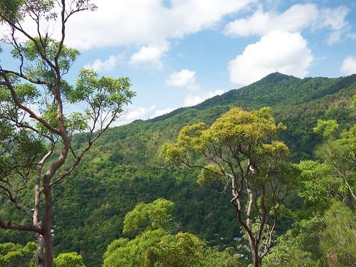 Rain forest near Kuranda