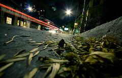 in the gutter again (tomms) Tags: street longexposure autumn toronto fall leaves night seasons gutter streaks davenportroad