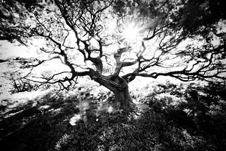 Tree Line 1