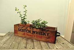 Vintage Wooden Crate Drawer Scotch Whisky Wood Box (Joie De Cleve) Tags: wood vintage wooden box liquor drawer whisky scotch etsy crate planter woodbox vintagedrawer vintagewoodencrate