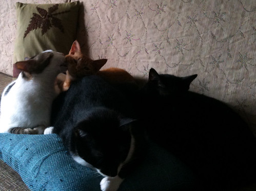 四貓大合照