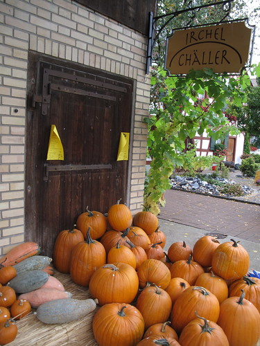 Pumpkins in Berg am Irchel, Switzerland