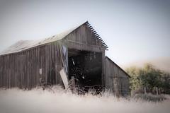 Abandoned Barn on the Beautiful Farm