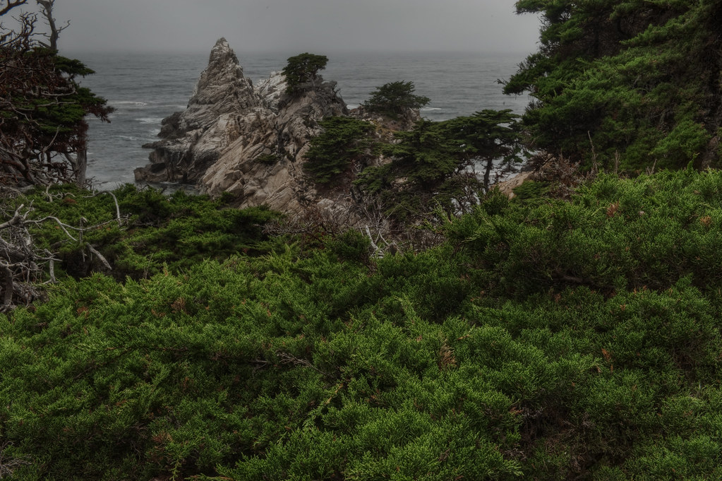 The Green bows of point lobos