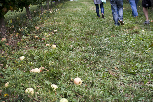 269.we went apple picking