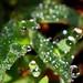 Granules of Life