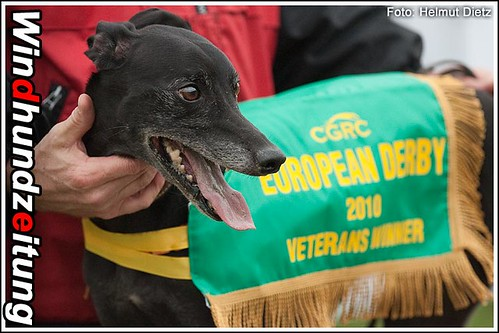 CGRC European Derby 2010 Whippet Veterans Champion: Dr. Doolittle Globe Glass, CZ