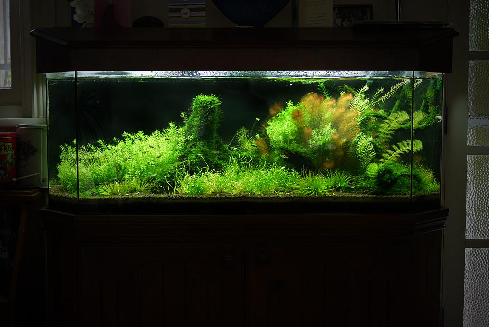 Thread: Albert Namatjira inspired Australian aquarium landscape