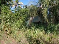it's a jungle out there (mainmanwalkin) Tags: abandoned florida everglades southbay sugarcane palmbeachcounty gatorland lakeokeechobee highway27 us27 ushighway27 evergladesgatorland claudepeppermemorialhighway