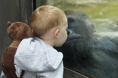 Stealing those gorilla kisses