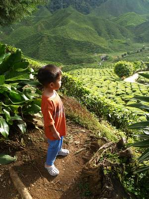 Julian at Bharat Tea Plantation