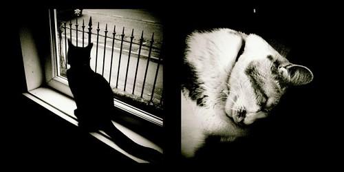 holga cats