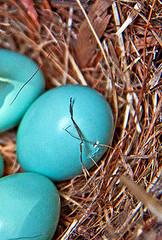 Huevos azules II