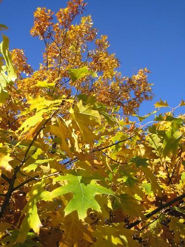 oaky-dokey, it's fall