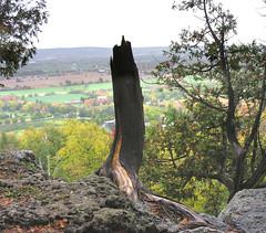 A stump (Bill Pawlitzki) Tags: tree fall leaves point photo nikon flickr snake most stump milton ever region rattlesnake rattle viewed halton 8800