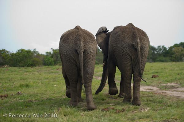 RYALE_Elephant_Sanctuary_6