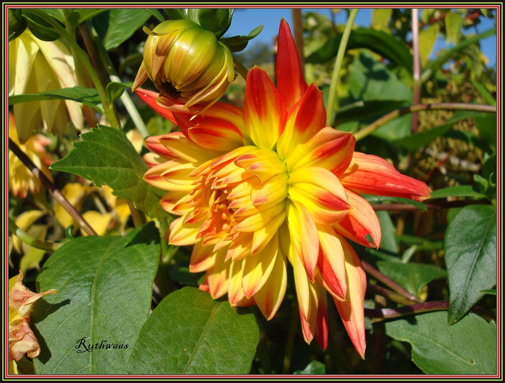 DSC04716 eigen tuin