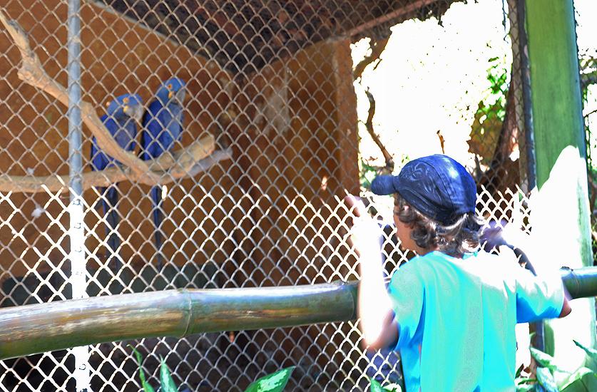 soteropoli.com fotografia fotos de salvador bahia brasil brazil 2010 zoo zoologico by tuniso (19)