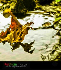 kanal 4 tv kurdish  kurdistan (Kurdistan Photo ) Tags: kurdistan nature loves photojournalism  sefti peshmargaorpeshmergekurdistan naturesfinest kurdphotography kurdistan2009 kurdistan2all kurdistan4ever landscape kuristani kurdistan4all kurdistan2008 kurdiskaa flickrdiamond goldstaraward kurdistan2006 kurdene fdsflickrtoys blueribbonwinner collection excapture barzani aplusphoto abigfave flickraward natureselegantshots kurdistanflowers karkuk flickrestrellas fiveflickrfavs cameradeourobrasil diamondclassphotographer goldenheartaward impressedbeauty world top20travelpix simplythebest~flowers photograph photography platinumphoto photospace supershot rubyphotographer thatsclassy travelandscapes nikonflickraward