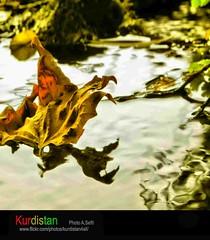 "kanal 4 tv kurdish  kurdistan (Kurdistan Photo كوردستان) Tags: kurdistan nature loves photojournalism كوردستان sefti peshmargaorpeshmergeپێشمهرگهkurdistan naturesfinest kurdphotography kurdistan2009 kurdistan2all kurdistan4ever landscape kuristani kurdistan4allكوردستان kurdistan2008 kurdiskaa flickrdiamond goldstaraward kurdistan2006 kurdene fdsflickrtoys blueribbonwinner collection excapture barzani aplusphoto abigfave ""flickraward"" natureselegantshots kurdistanflowers karkuk flickrestrellas fiveflickrfavs cameradeourobrasil diamondclassphotographer goldenheartaward impressedbeauty world top20travelpix simplythebest~flowers photograph photography platinumphoto photospace supershot rubyphotographer thatsclassy ®travelandscapes ""nikonflickraward"""
