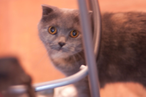 Lila, concealed behind furniture