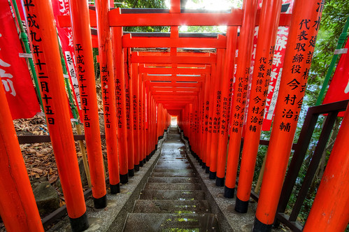 Light at the End of the Torii