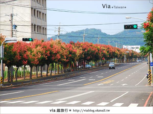 【台中】台灣秋天最美的街道!台中大坑發現美麗的台灣欒樹7