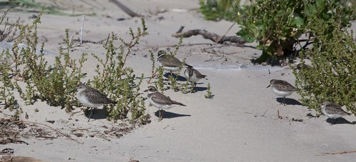 Curlew Sand and friends