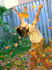 Nico (Ian Muttoo) Tags: thanksgiving autumn boy ontario canada color colour fall leaves fun leaf maple colorful child joy gimp canadian fallen colourful mississauga ufraw 101010 tgamphotodeskthanksgiving dsc97204edit2