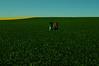 verde que te quiero verde (nachoizu) Tags: blue sky verde green art film field yellow rojo nikon centro amarillo nubes campo cielos camioneta balcarce colza atención sierreas estanciera
