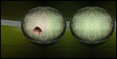 Anti-matter maternity consumer. A consortium. (onesecbeforethedub) Tags: food art digital photoshop mouth painting hair paint postmodern post image artistic egg theory manipulation images eat technical vassilis vasilis flusser vilem galanos
