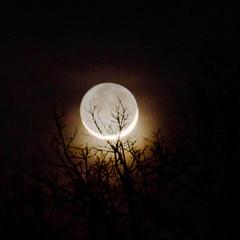 Rim of the Moon (Carl's Photography) Tags: moon tree nikon iso400 grain limbs f80 noise rim moons