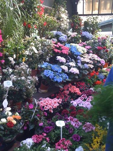 <span>parigi</span>Mercato dei fiori<br><br><p class='tag'>tag:<br/>luoghi | viaggio | parigi | </p>