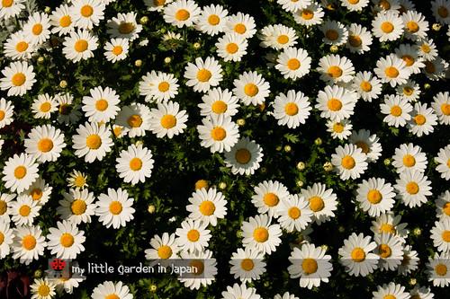 spring-in-tokyo-1