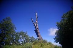 DSC07846 (rc90459) Tags: 最後的夫妻樹 夫妻樹 塔塔加 玉山