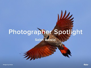 Photographer Spotlight - Salah Baazizi