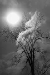 IMG_4270-Edit-Edit (shawncormier) Tags: doubleexposure incamera abstract blackandwhite