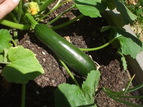zucchini!!!