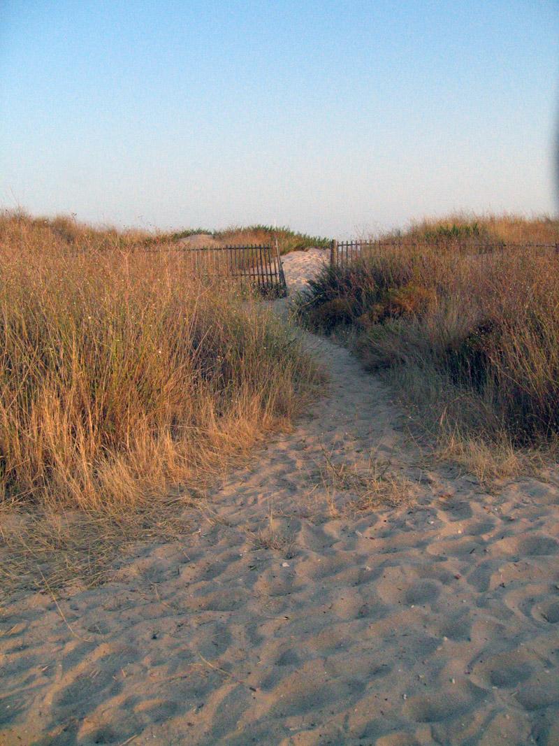 caminho da praia // beach path
